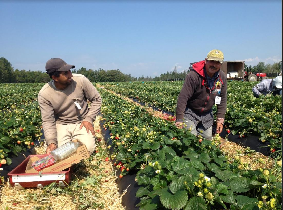 Visas de Trabajo Temporal Para Hondureños